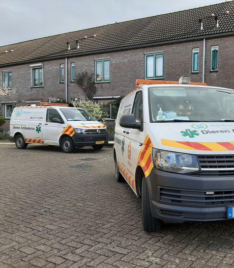 Hond bijt kat dood in Gorinchem, buurt kan slechts toekijken