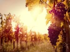 'n Goed glas: Italië, Mekka voor wijnavonturiers