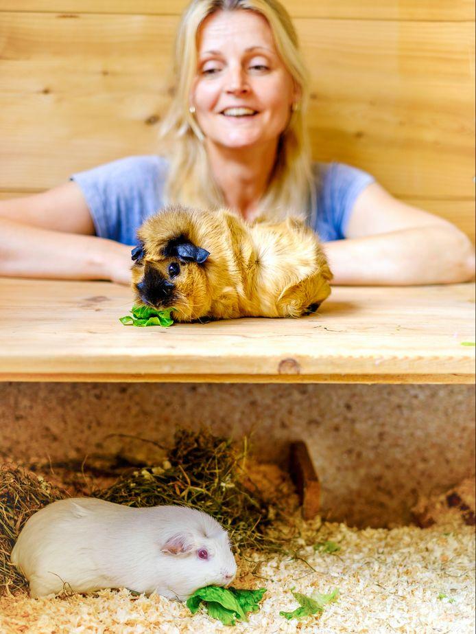 Joyce Schreuder vangt cavia's op via de dierenambulance of als mensen de cavia's niet meer willen.