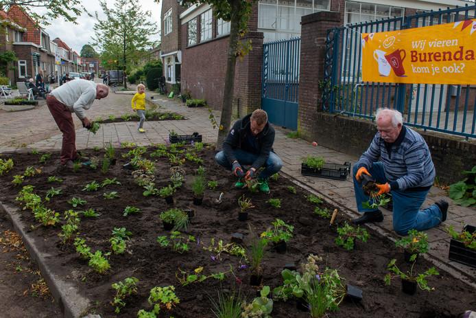 Vorig jaar fleurden bewoners van de Seringenstraat in Zwolle tijdens Burendag gezamenlijk hun straat op door nieuw groen in de perkjes aan te planten.