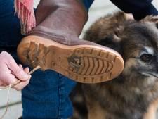 Een hondendrol van 100 euro in Geldermalsen