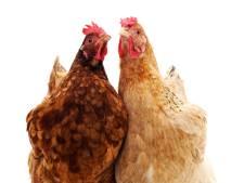 Bewoner Oorberlaan wil dieren houden ondanks oprukkende woningbouw