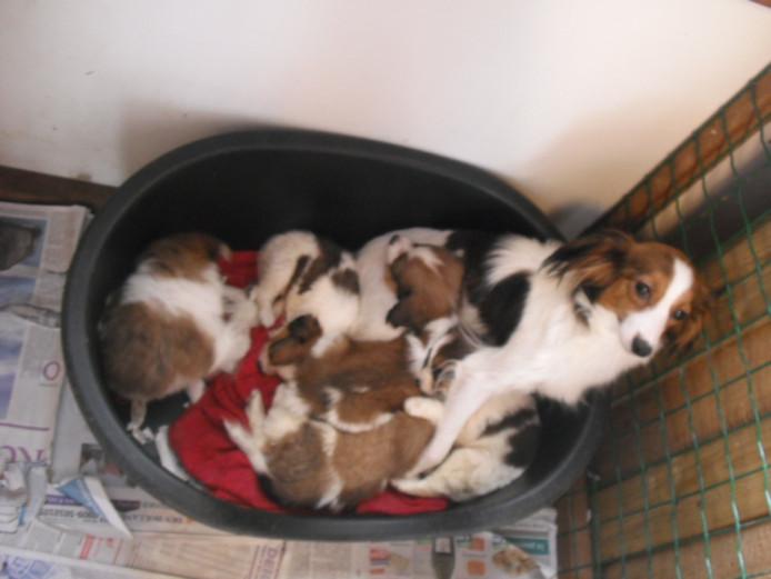 Het hondje dat door de handelaar Lydia werd genoemd. Irene had bijna één van de pups gekocht.
