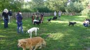 Honden ontdekken speelweide in Kaandelpark
