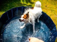Minder water uit de kraan door extreem verbruik: 'Geen zwembadjes meer vullen'