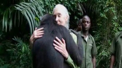 Chimpansee omarmt Jane Goodall bij vrijlating in het wild