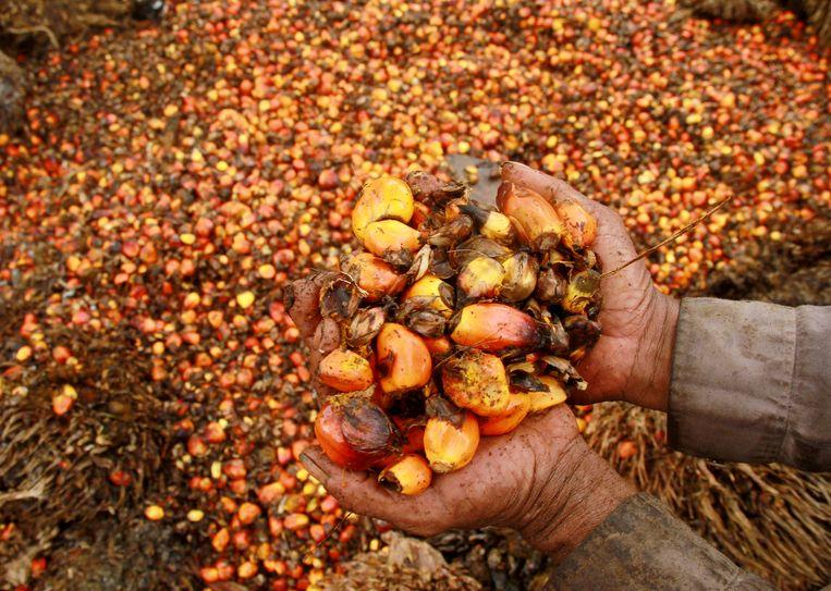 Palmolie wordt gehaald uit de vruchten van de oliepalm, die afkomstig is uit West-Afrika.