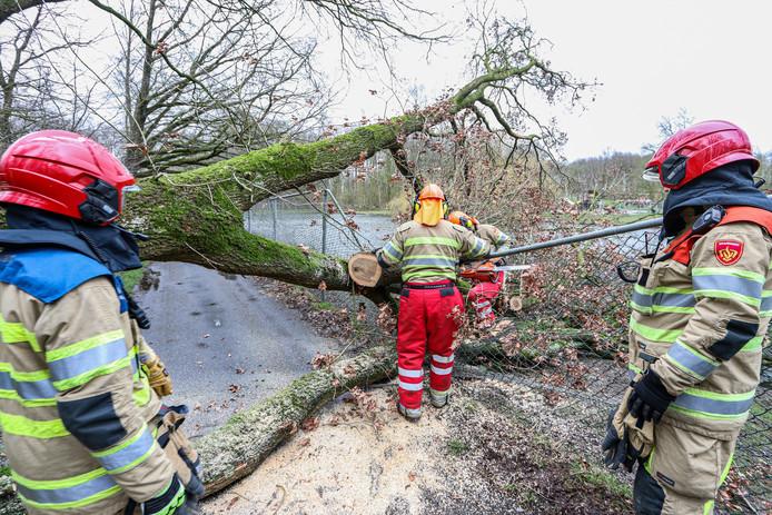 De boom plette het hekwerk rond de kinderboerderij. Hulpdiensten hebben het provisorisch gerepareerd.