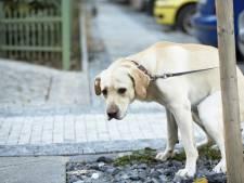 Hogere hondenbelasting in Grave?