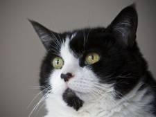 Katteneigenaren opgepast: Action verkoopt dodelijke aanslagreiniger