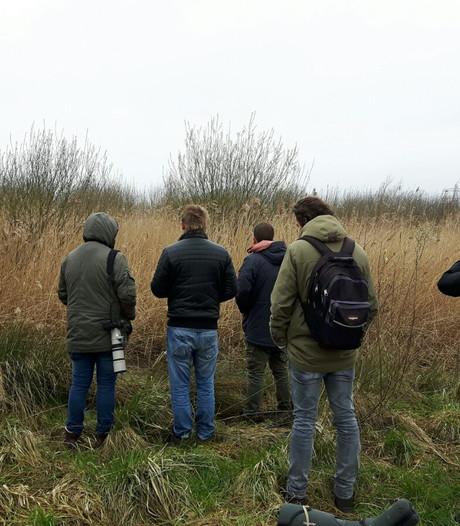 Zeldzame vogel gespot in Biesbosch