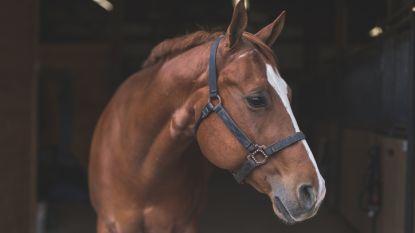 Paard schrikt van voorbijrijdende wagen: ruiter en paard gewond