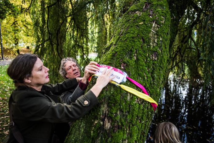 Laura Victoria is de naam van de treurwilg in het park achter concertzaal Musis.
