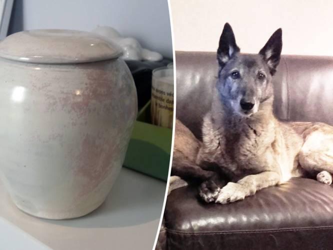 """Urne met as van hond gestolen uit auto, baasjes Yves (77) en Lucie (80) kapot van verdriet: """"We willen ons vriendje terug"""""""