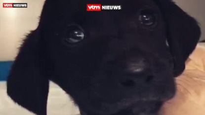 Puppy in Turkije zo zwaar mishandeld, dat zelfs Erdogan zijn afschuw uit