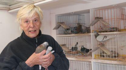 Anny (69) vindt troost bij haar duiven na verwoestende brand