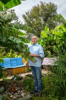 Bananen, mango's en avocado's groeien in Zoetermeerse achtertuin