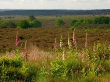 Boswachter: 'Water op Sallandse Heuvelrug beter vasthouden'