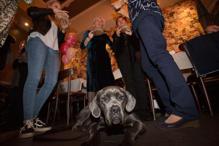 Puppy Gloria tussen de feestvierders