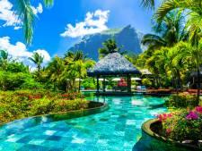 Droombaan: luxueus resort op de Malediven is op zoek naar een boekenverkoper