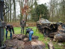 Eeuwenoude Mariaboom in het Wapenveldse Kloosterbos heeft een opvolger