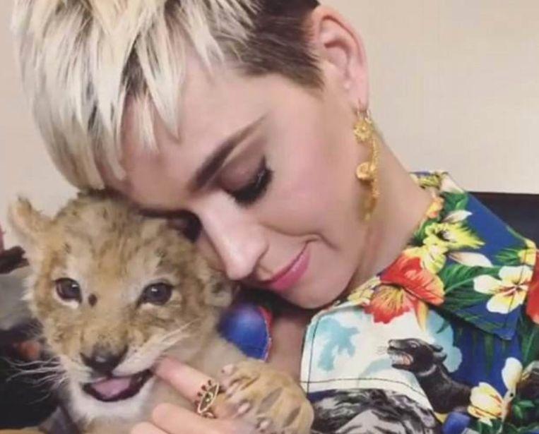 Katy Perry knuffelt met een klein leeuwtje.