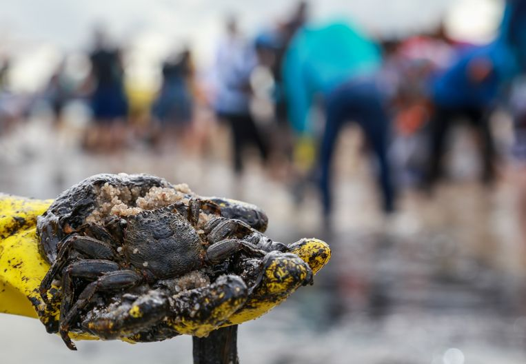 Een door de olie besmeurde krab. Beeld REUTERS