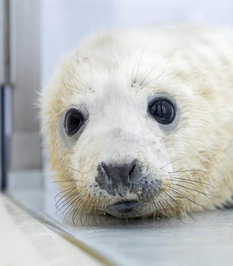 Stichting schenkt kliniek aan zeehondenopvang A Seal in Stellendam