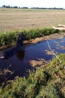 Brandweer Woubrugge trekt paard uit sloot