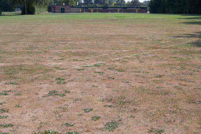 Slechte velden door de droogte.