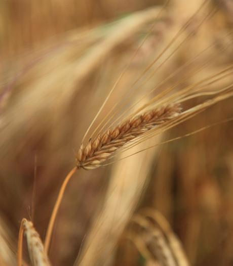 CDA: pachtgronden alleen voor lokale boer