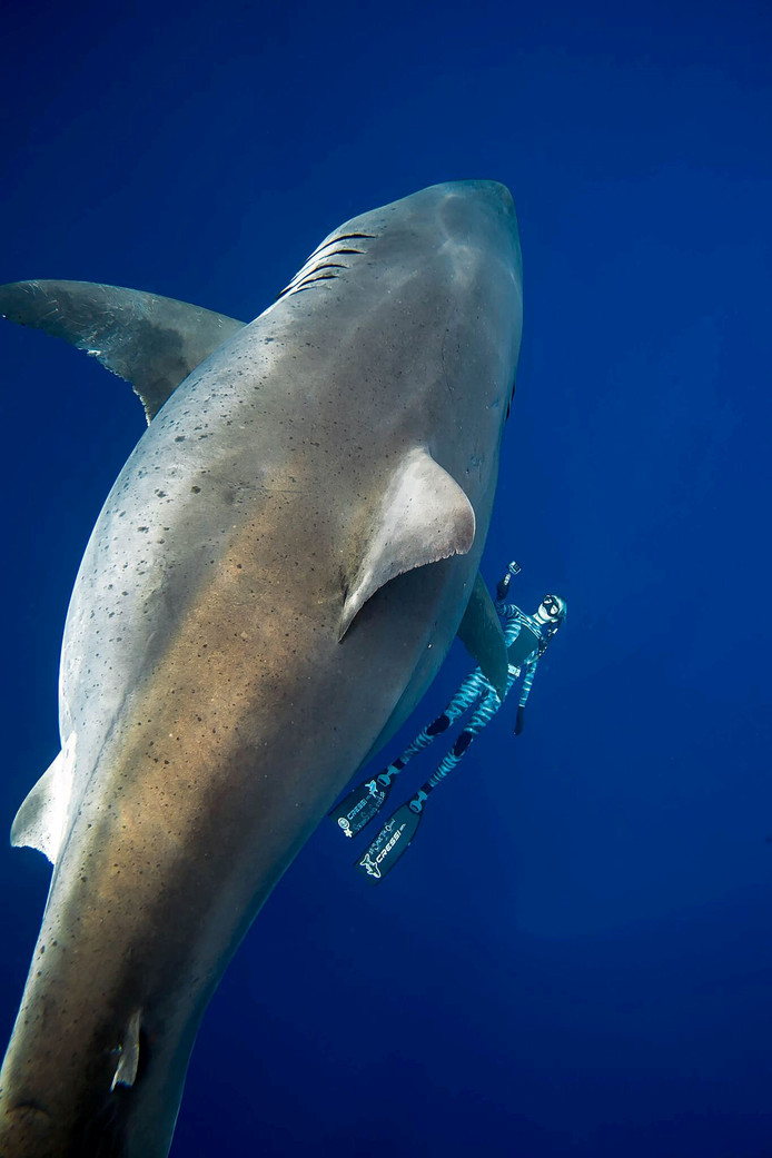Zwemmen met 'Deep Blue'.