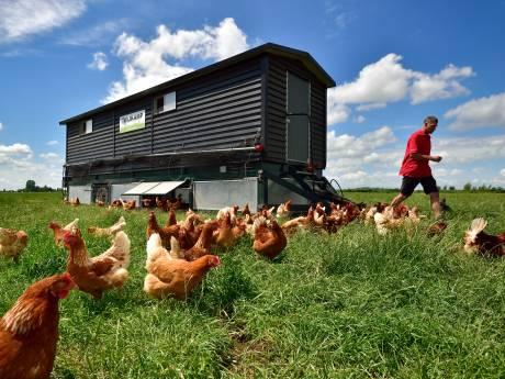 Deze boer heeft een rijdend kippenhok met zonnepanelen: 'Mijn beestjes hebben alle ruimte. Dat proef je in het ei'