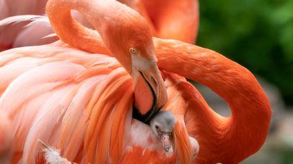 Dieven stelen flamingo's uit park in Duitsland