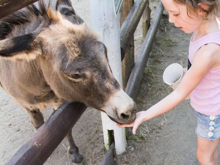 Kinderen moeten dieren in het echt zien, niet in tekenfilms of op plaktatoeages