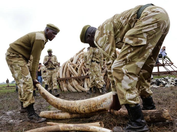 Rangers van de Kenya Wildlife Service (KWS) met slagtanden.