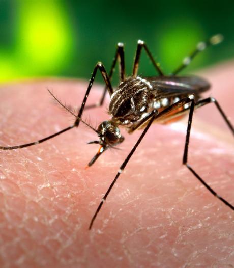 Nog even volhouden, het gezoem van muggen houdt binnenkort op