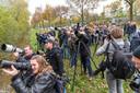 Horden vogelspotters reisden in 2013 naar Zwolle om een glimp op te vangen van de zeer zeldzame sperweruil.