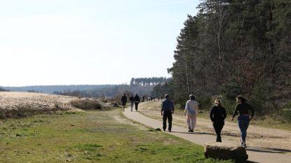 Al dagen veel wandelaars in Mechelse Heide: ontdek hier alternatieven in Maasmechelen