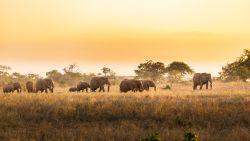 Op jacht naar olifantenstropers