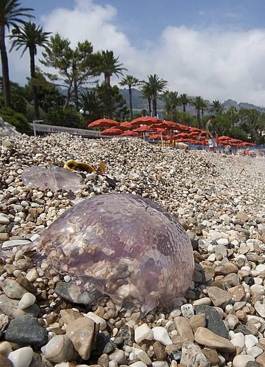 Het strand van Beaulieu ligt bezaaid met kwallen