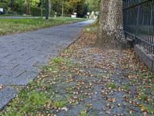 Eikels en beukennootjes, ze liggen in straten en bossen in hele tapijten