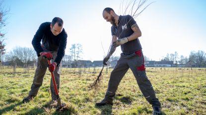 Park d'Ursel breidt uit met 300 nieuwe bomen
