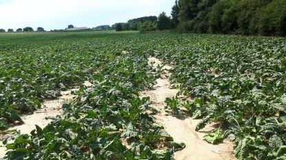 Oproep aan land- en tuinbouwbedrijven: geef schade door droogte aan bij de stad