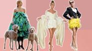 Hoe Céline Dion uitgroeide van grijze muis tot stijlicoon