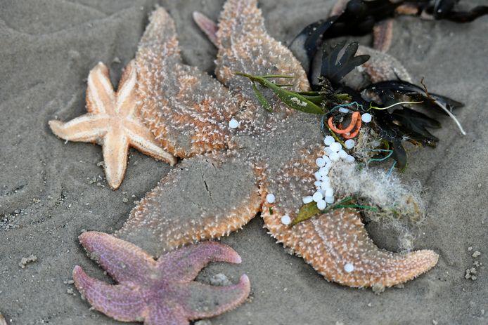 Kleine stukjes plastic op het strand van Schiermonnikoog.