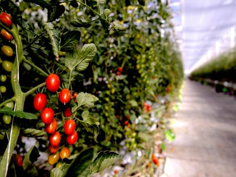 'Vanwege corona speciale regeling nodig voor groente-, fruit- en sierteelt'