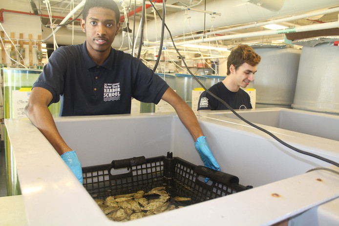 Edward Charlemagne kweekt op de New York Harbor School oesters en algen om ze te voeden.