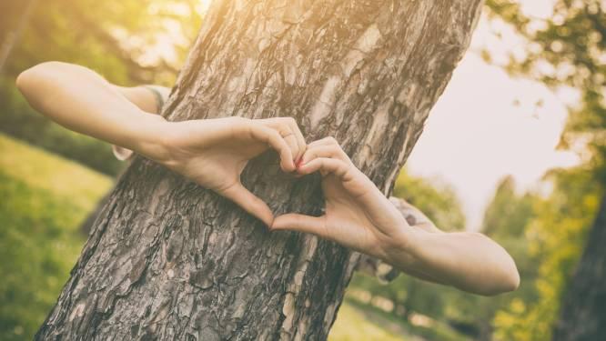 Roeselare deelt gratis pakketjes liefdesbomen uit voor Valentijnsdag