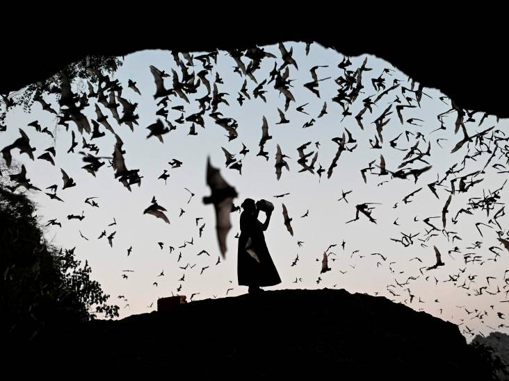 Vleermuis uit het verdomhoekje: ze zijn geheimzinnig, je ziet ze amper, maar wat zijn ze nuttig